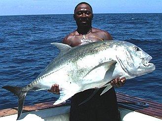 Fish for Big fishing net