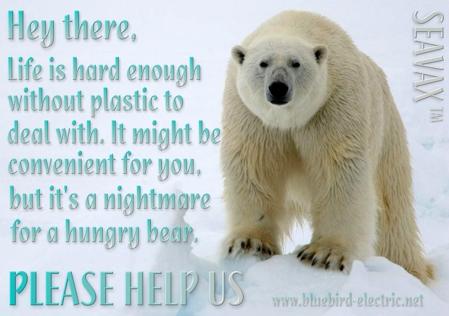 Polar bears suffer as a result of plastic ocean pollution