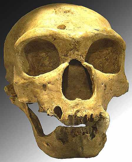 a research on the neanderthals and their association to cold climates The mystery of how early humans survived the ice age while neanderthals neanderthals were not equipped with the cold neanderthals but their.