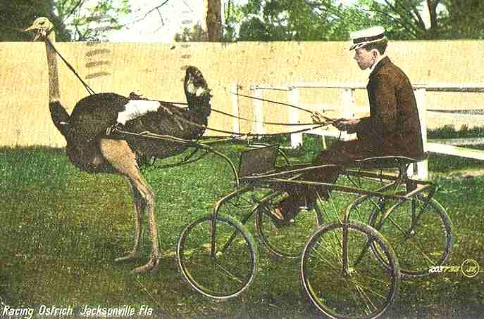 Animals Pulling Wagon : Crazy old playthings an internet treasury of animals