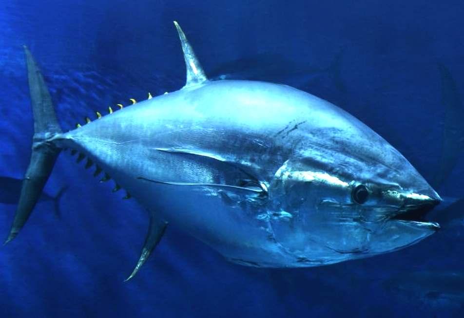 Oceanography | Marine Careers