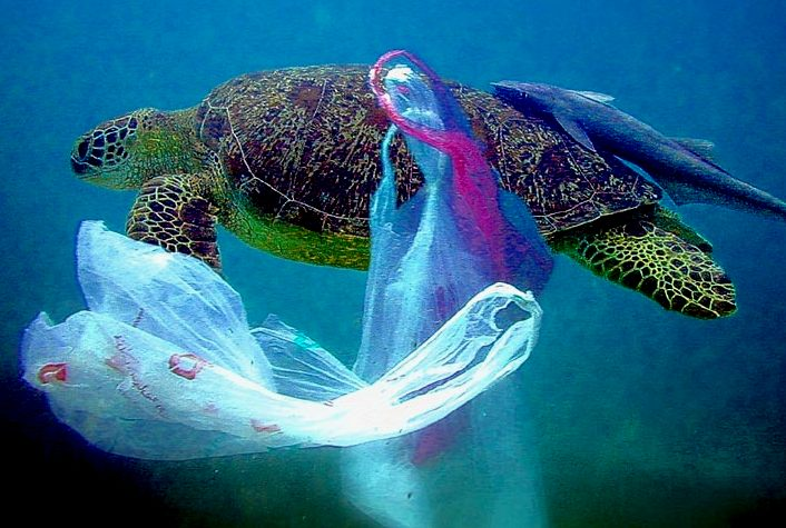Sea turtle swimming in plastic waste