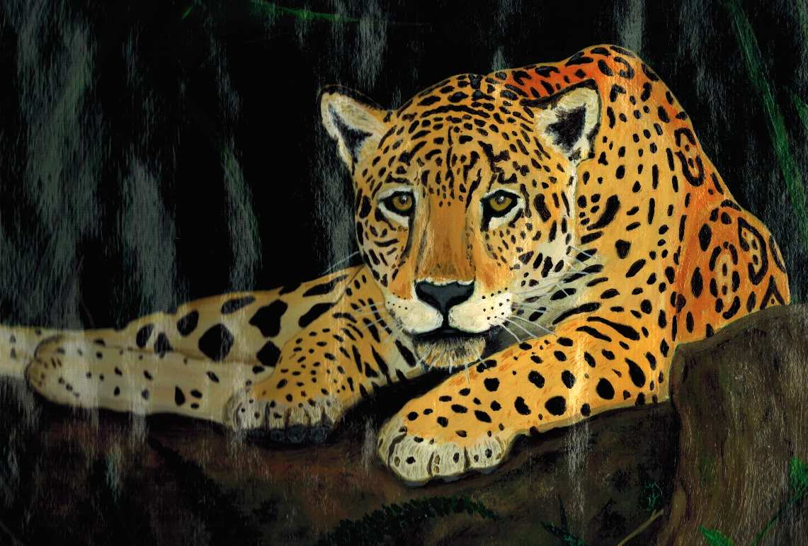 Pantherus superbus, a leopard basking in the rocks