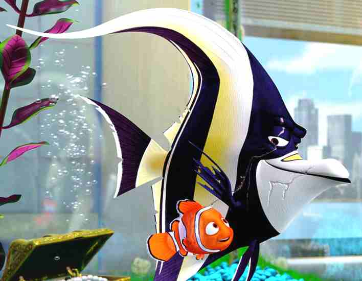 Fillum reviews only more proper like finding nemo for Finding nemo fish