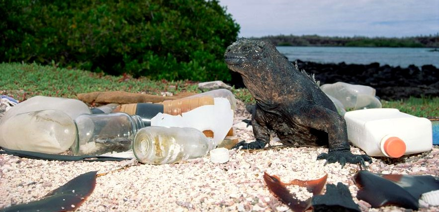 Plastic is all around us on land and in the sea
