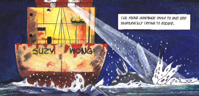 Suzy Wong, Japanese pirate whaling ship chases a baby humpback whale