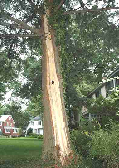 Lightning damage to tree in Maplewood, New Jersey USA
