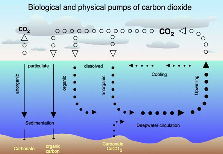 Carbon Dioxide biological CO2 cycle and physical pump