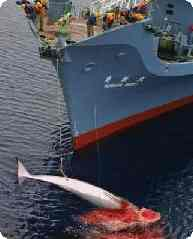 whaling argumentative Im doing a persuasive essay on it and need a little help.