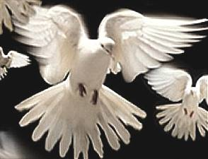 Doves peace to all men for the New Year