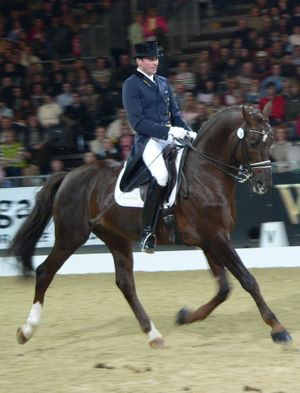 Horses and sport dressage